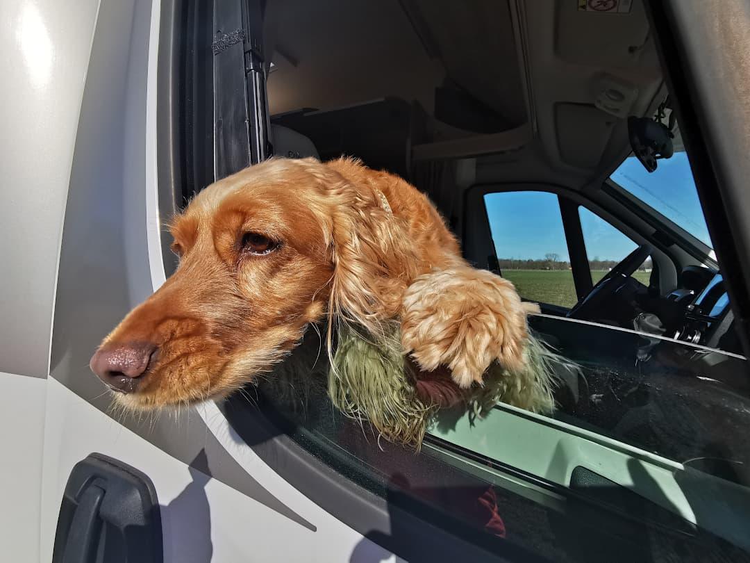 Urlaub im gemieteten Wohnmobil mit Hund