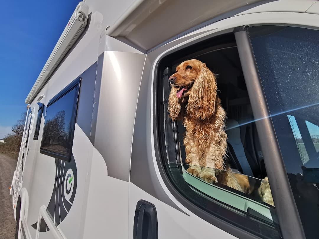 Honey im Beifahrerfenster - Wohnmobil mieten mit Hund