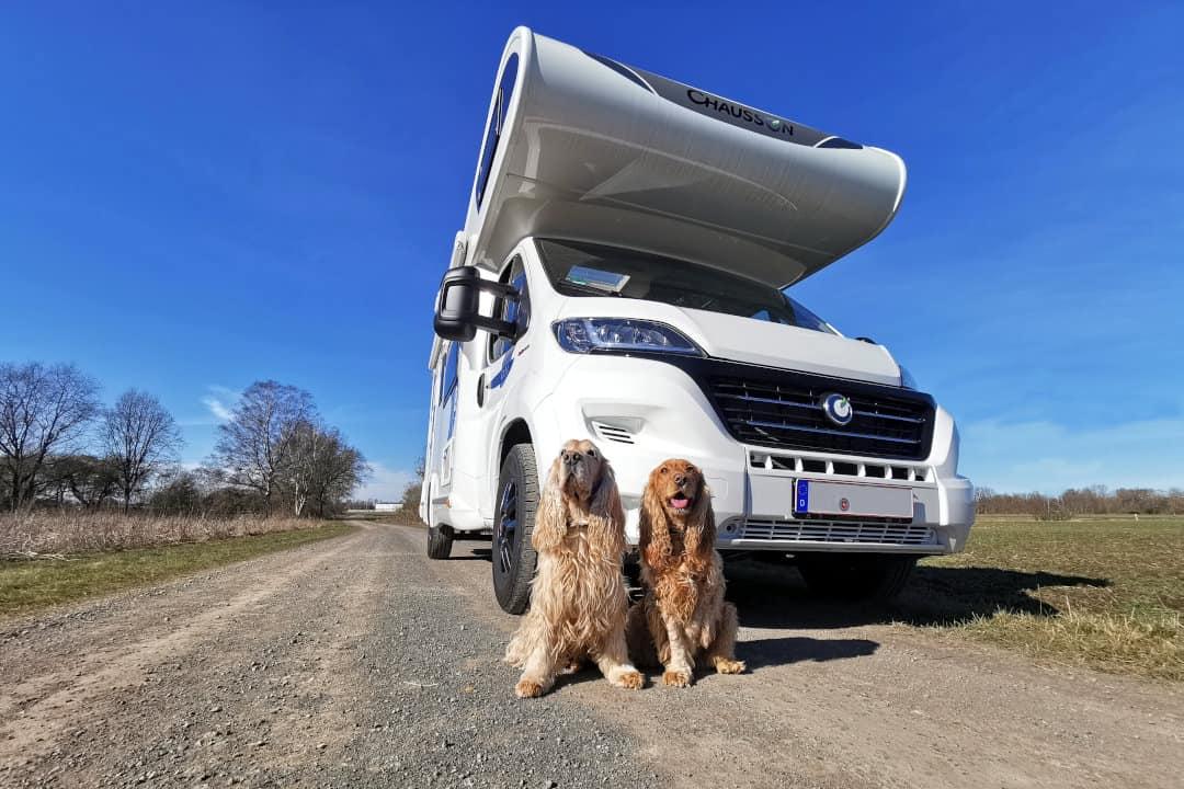 Wohnmobil mieten mit Hund - im Autohaus am Damm kein Problem