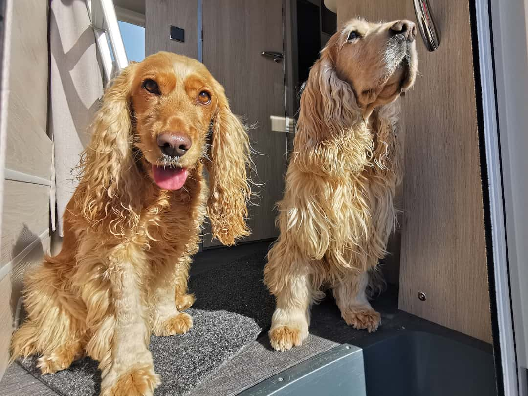Mit Hund in den Wohnmobilurlaub - Eine gute Idee finden Milow und Honey